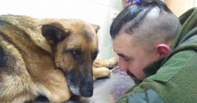 Він шукав її 4 доби… Собаку, яка з ним пройшла АТО… Злякавшись салютів, вона вибігла на дорогу і потрапила під…