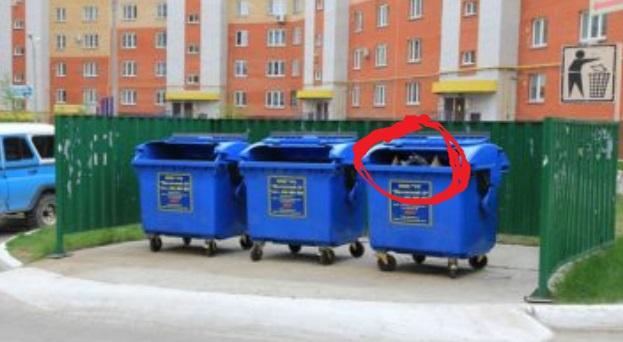 Жінка почула жалібний писк зі сміттєвого контейнера… Далі вона ризикнула і підійшла…