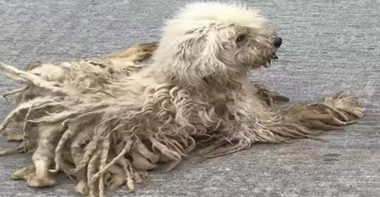 Больной пес избегал людей, но доверился доброму парню, который стал его другом