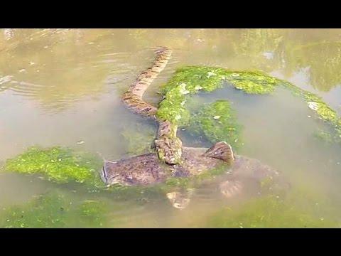 Я підійшов до змії, яка наблизилася до величезної риби. А тепер увага на 0:20 (ВІДЕО)