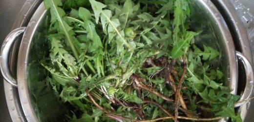 Всього 1 листок може врятувати і полегшити стан! Зростає практично скрізь, але мало хто знає, як його застосовувати …