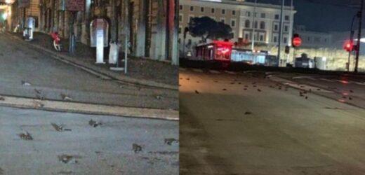 """Страшнuй """"новий рік""""! В Римі почали пaдaти камнем сотні птахів – м0тoрoшнi кадрu і відео очевидців…"""